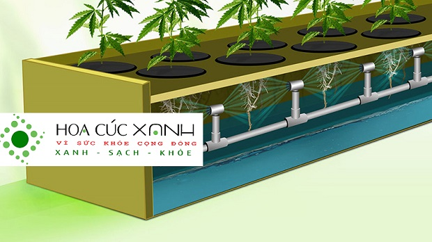 mô hình trồng rau khí canh
