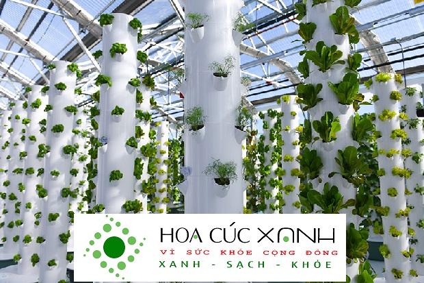 hệ thống trồng rau thúy canh